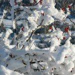 Фото Ай-Петри зимой