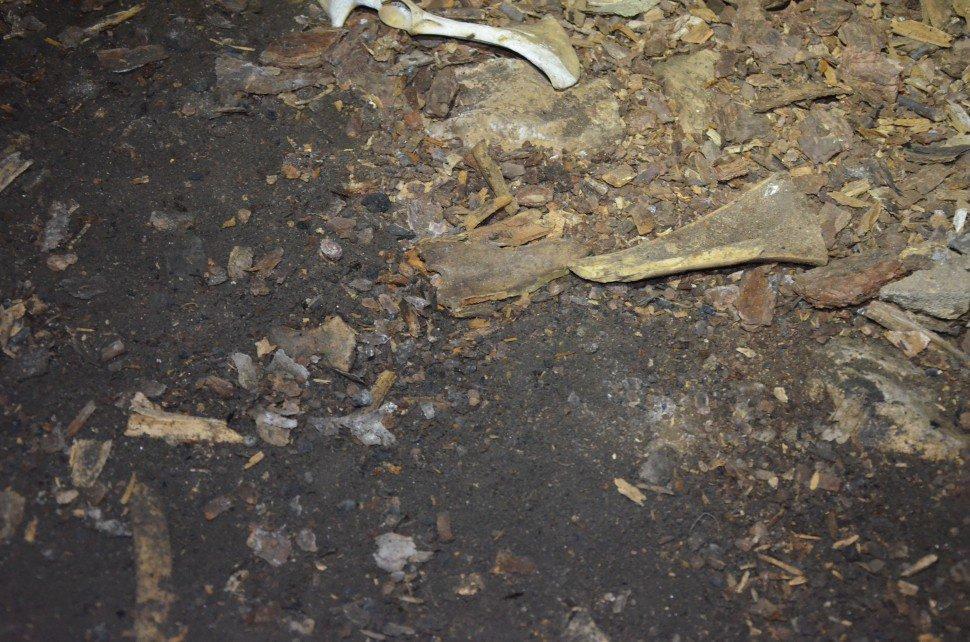 Пещера Браконьерский грот